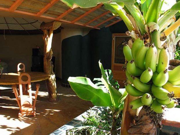 Своя еда Помимо жилых помещений в «Земном ковчеге» предусмотрена оранжерея, в которой можно выращива