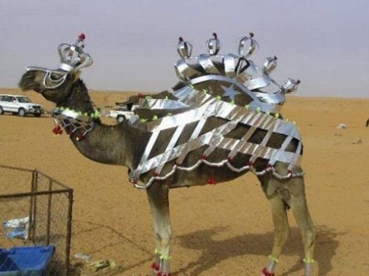 Царь-верблюд.