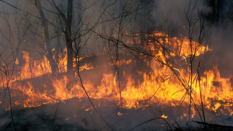 Причиной пожара виркутском поселке стало замыкание проводов