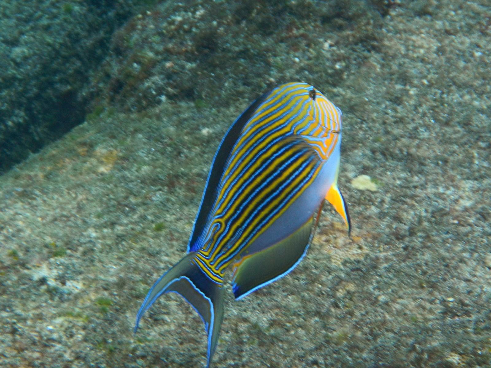 море названием с фото в рыбы андаманском