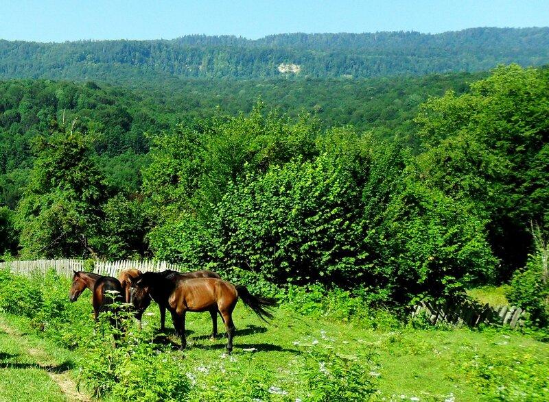 Кони у тропы