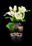 DBK PLANTS 063.png