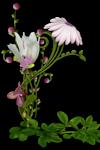fleur2.png