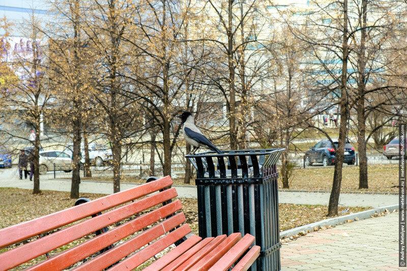 екатеринбургская ворона на урне возле памятника