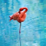 розовая птицы