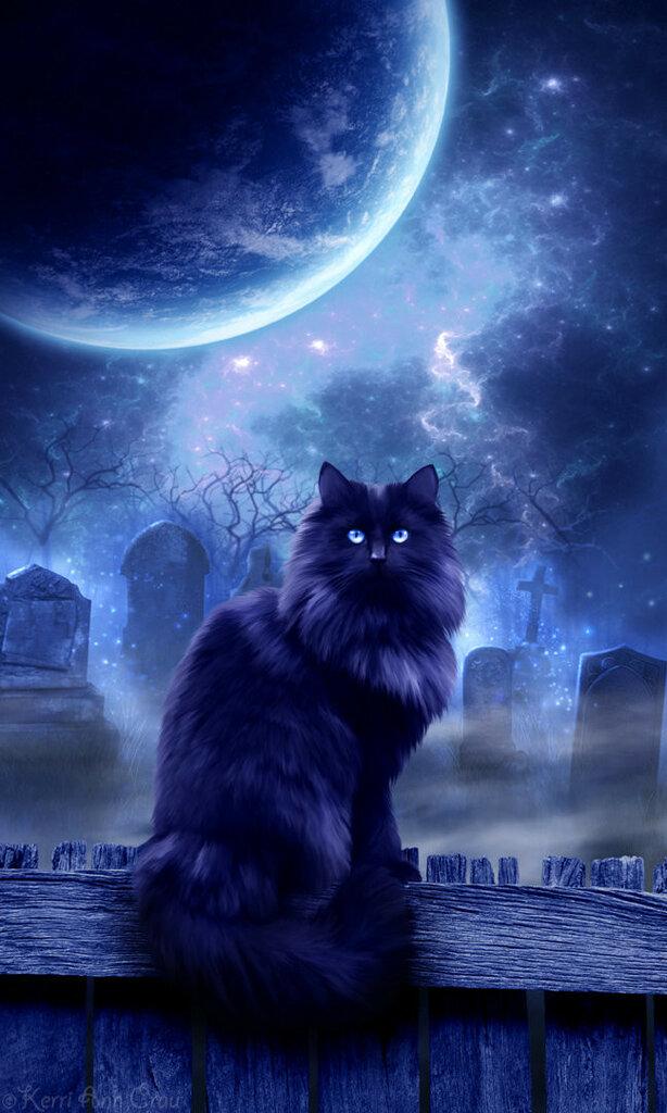 Картинка ночной кот