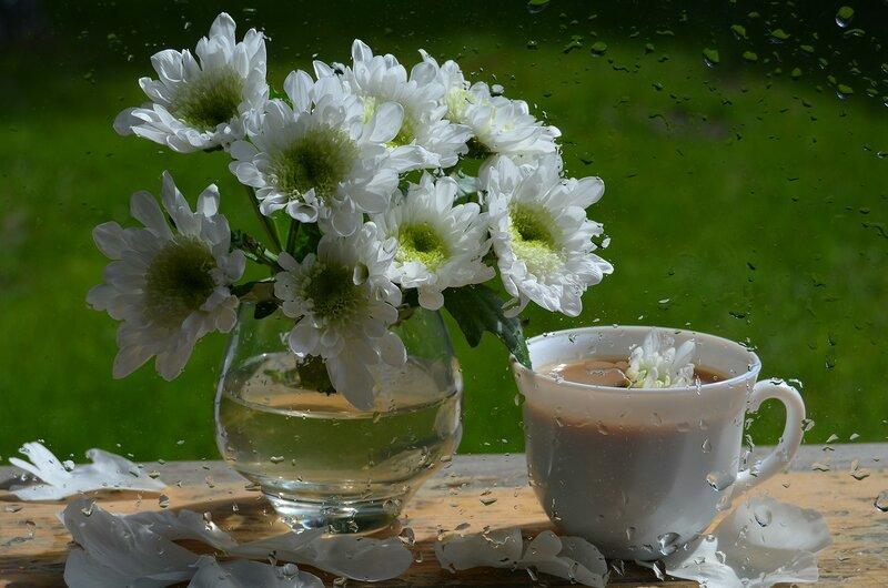 Утро в хризантемовом саду