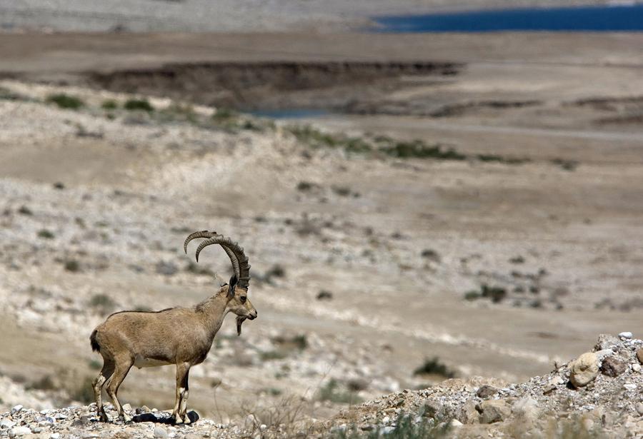 Лечебные грязи Мёртвого моря, 28 мая 2009 года.