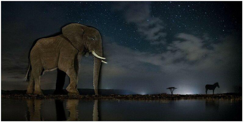 22 августа. Слон