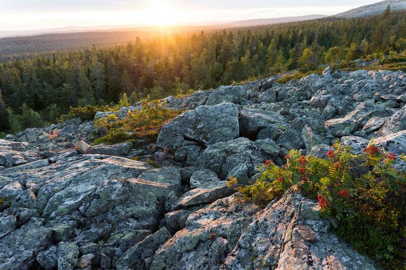 красивый пейзаж карликовая рябина и камни на закате