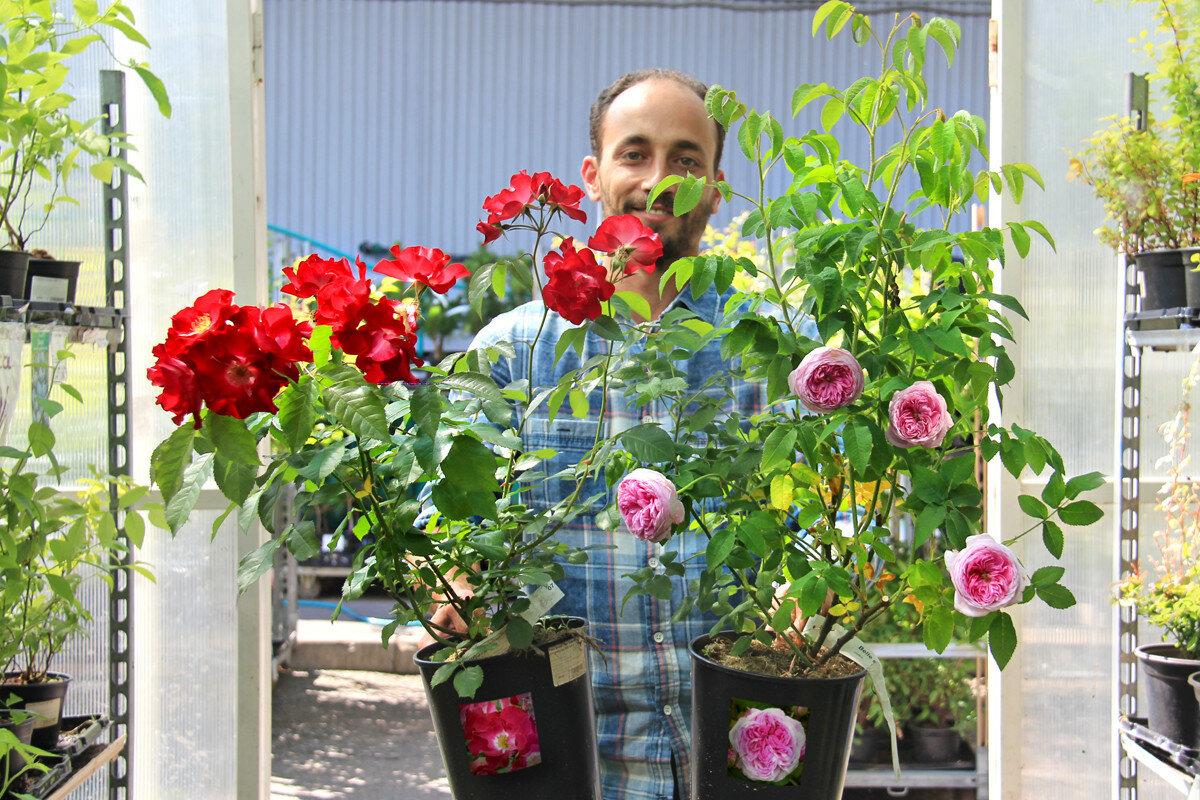 Сегодня в продаже! Роскошные Розы ЗКС из питомника Belle Epoque