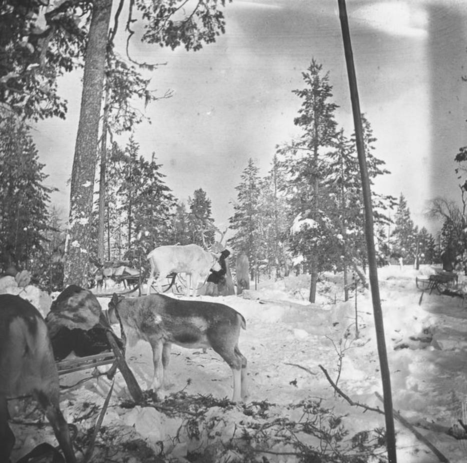 95. Олени и сани в лесу