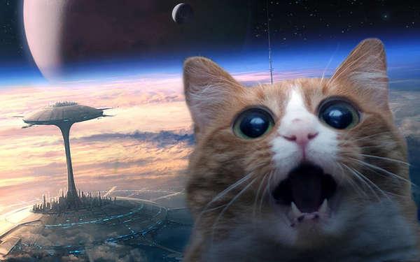 Открытки с Всемирным днём НЛО. Кот на Марсе!