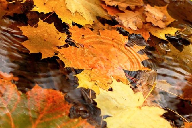 Открытки. Осень. Желтые кленовые листья