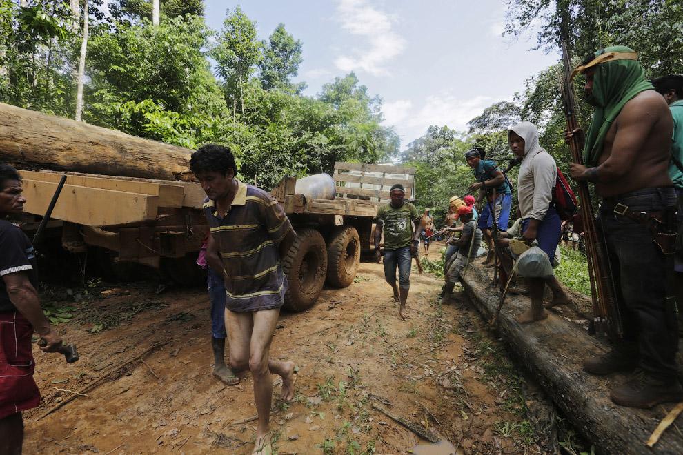 15. Свежеспиленные деревья распиливаются…(Фото Reuters | Lunae Parracho):