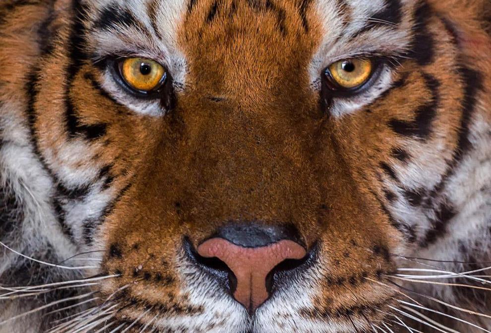9. Лев. В его глазах — храбрость.