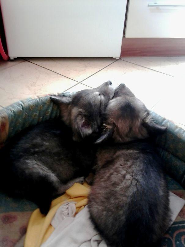 Собака – акробака