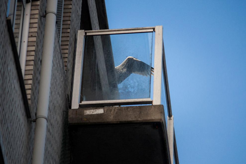 8. Нидерланды имеют самую большую колонию серых цапель в Европе. (Фото Julie Hrudova):