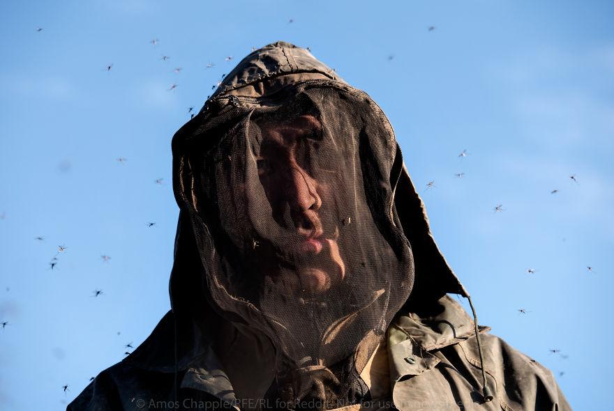 В теплую погоду некоторые мужчины одеваются скорее как пчеловоды, а не как люди, выполняющие тяжелую