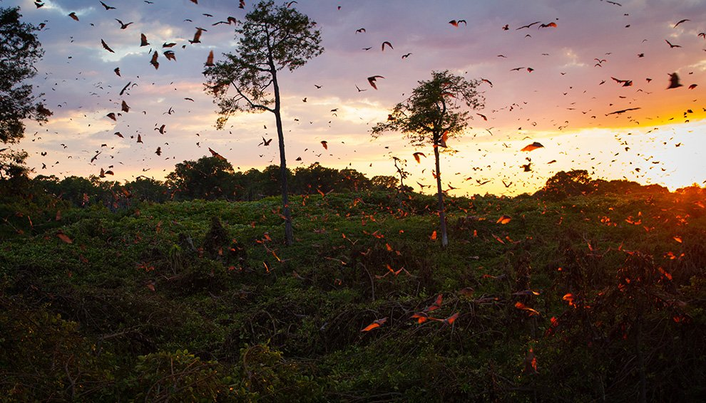 Между прочим, летучие мыши — чрезвычайно полезные животные: насекомоядная летучая мышь за час о