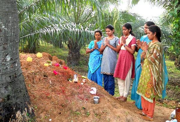Нагапанчами — индуистский праздник, когда все вместо работы умасливают змей (9 фото)