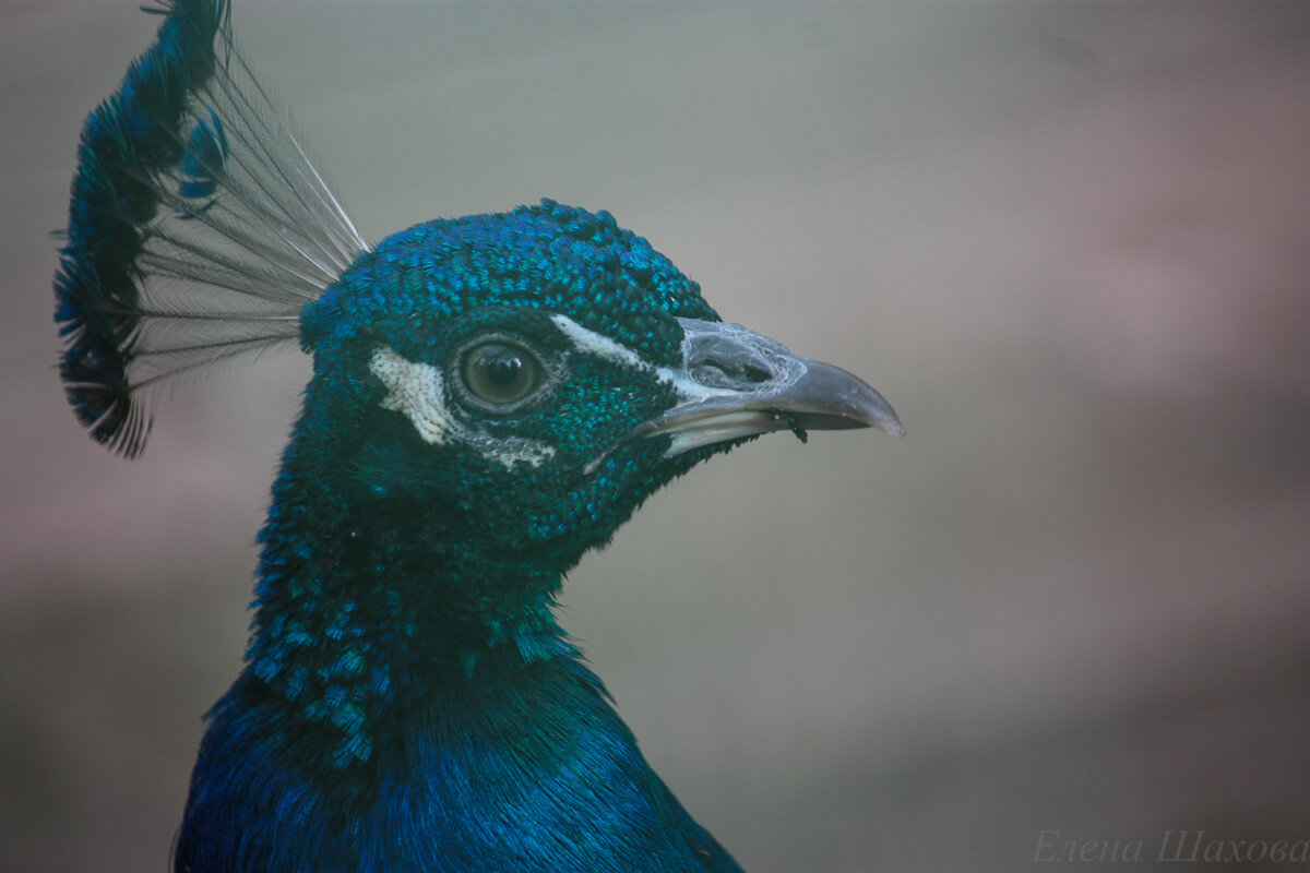 Птица-8.jpg