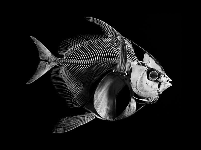 Opah © Patrick Gries