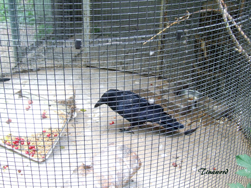 зоопарк-15.jpg