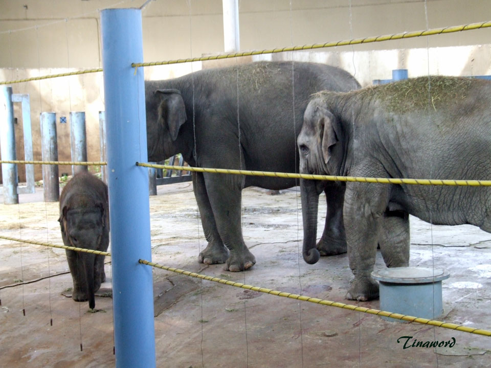 зоопарк-63.jpg