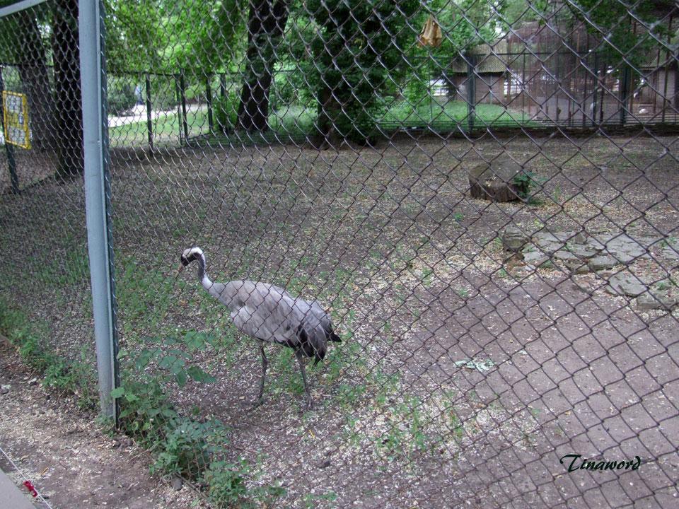 зоопарк-44.jpg