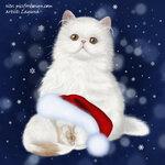 christmas_cats_2.jpg
