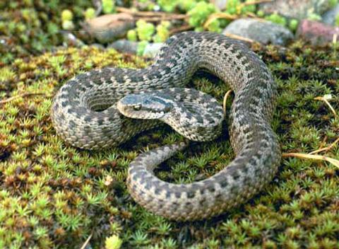 Медики не поверили ребенку, который позже умер в больнице от укуса змеи