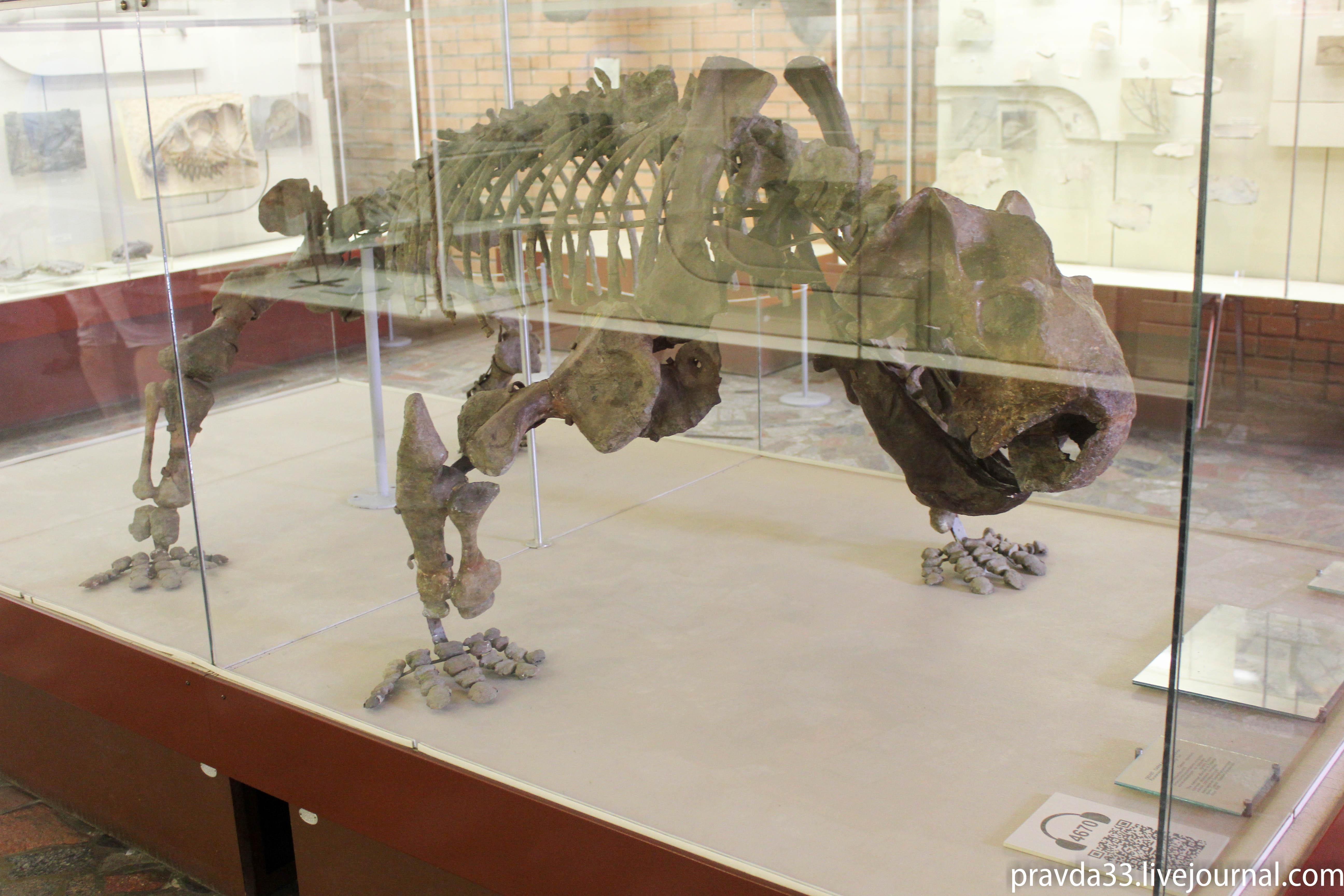 Музей палеонтологии-27.jpg