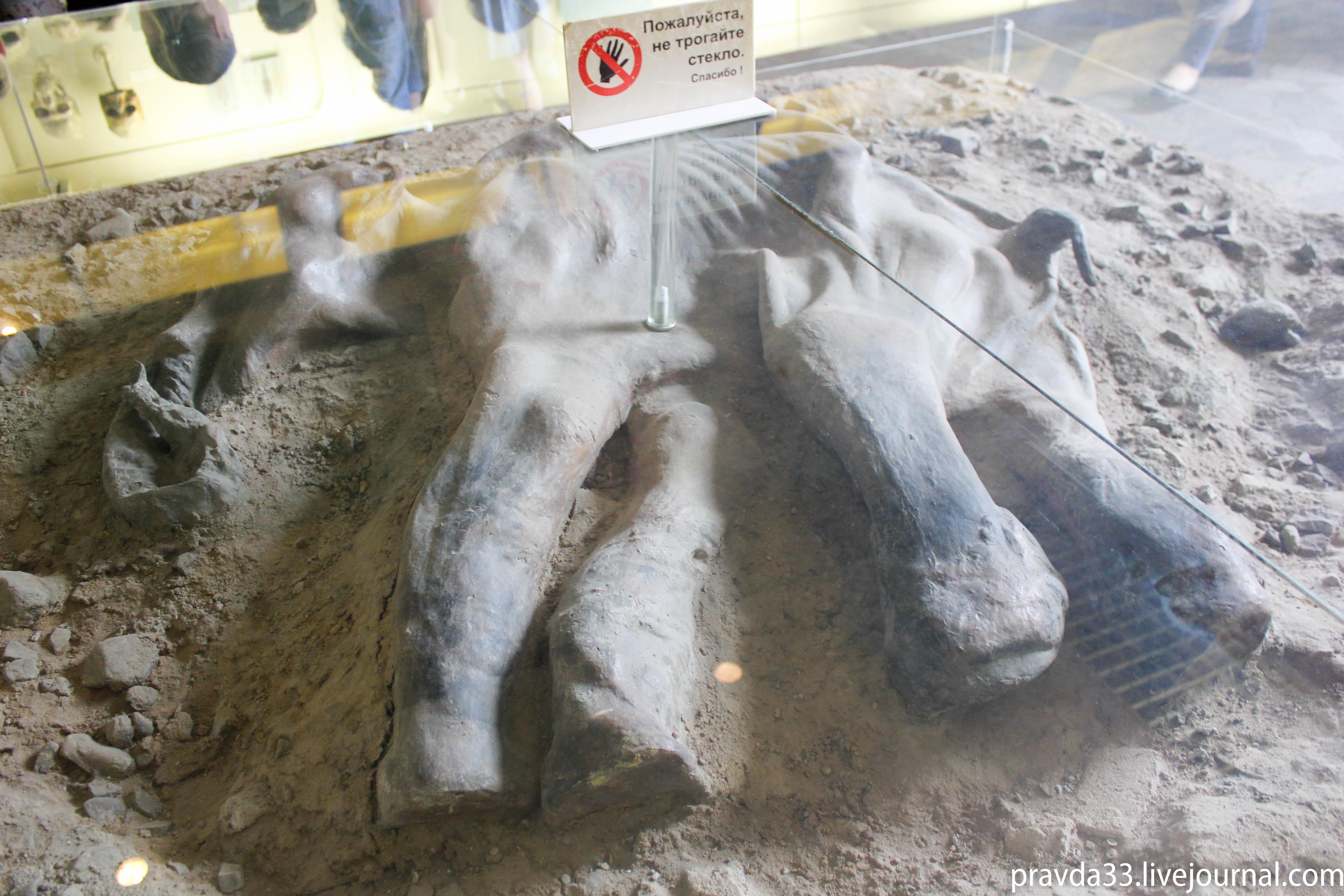 Музей палеонтологии-77.jpg