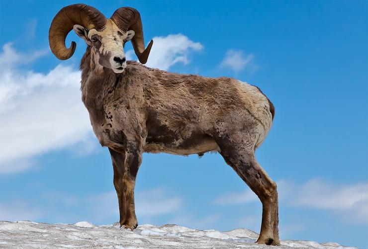 Млекопитающие, о существовании которых вы возможно не знали