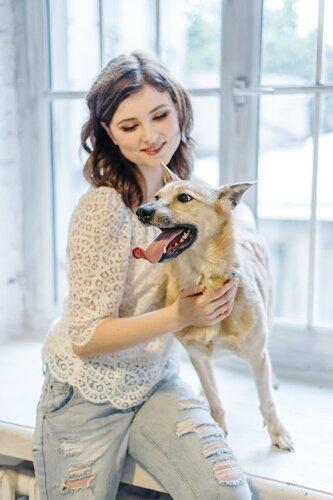 Лиса, собака из приюта догпорта