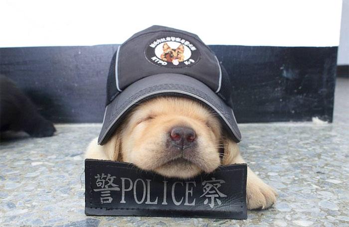 В полиции Тайваня появились новобранцы, обезоруживающие очарованием
