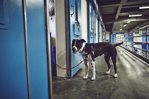 «Больше всего слез пролилось в конце программы — когда собак забрали в семьи и воспитателям пришлось