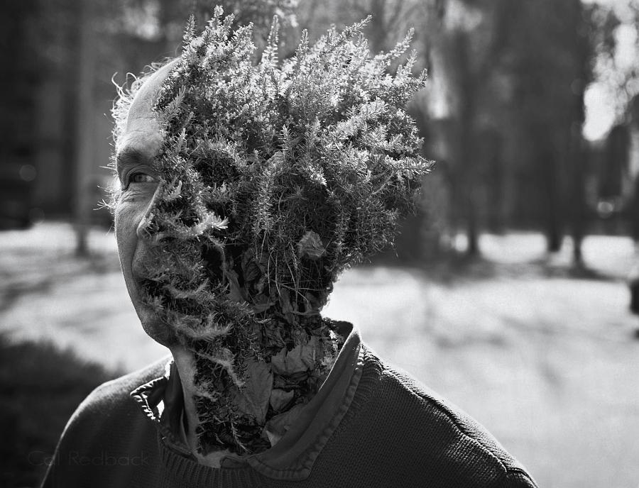 Люди превращаются в растения. Фотоманипуляции Кэла Редбака (6 фото)