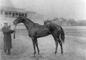 Лошадь Канаро, 2-й в Императорском призе.