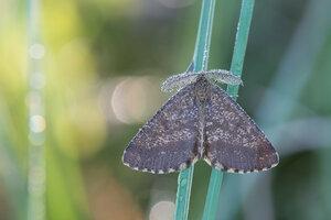s:дневные бабочки ,s:бабочки