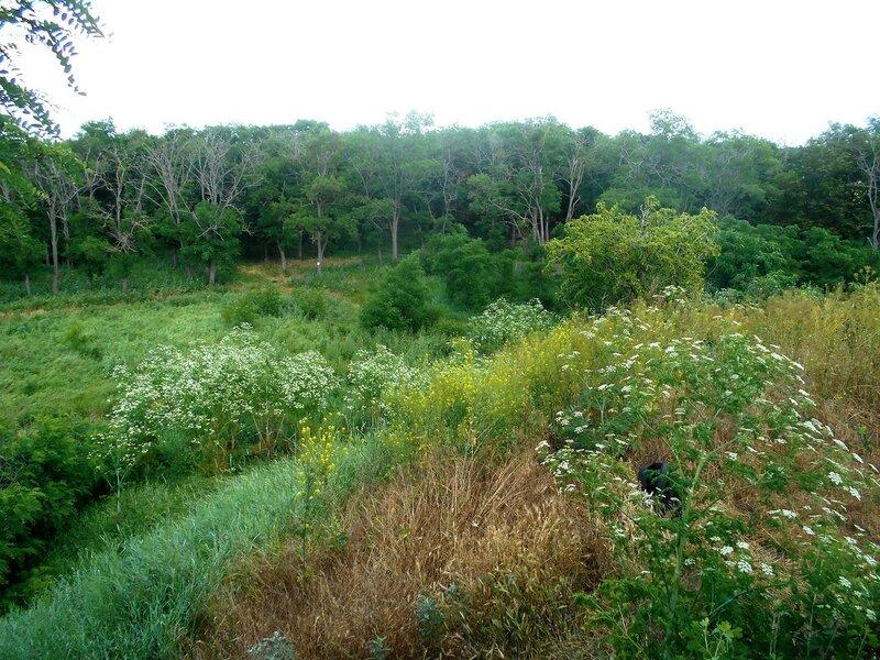 Там, в лесах ... DSCN2560.JPG