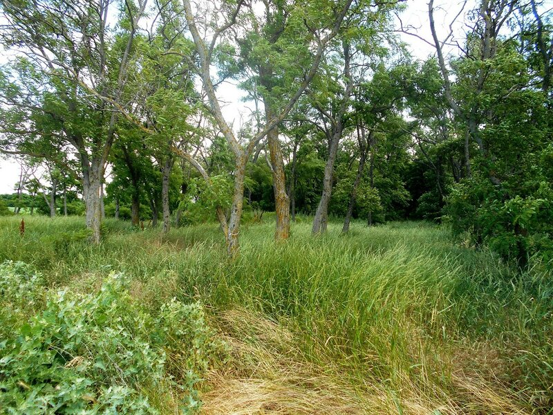 Тропою через лес ... DSCN2567.JPG