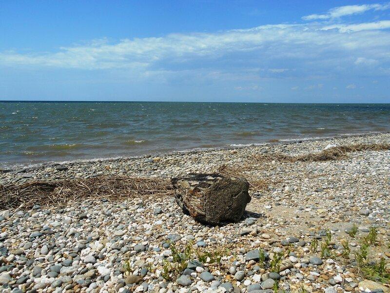 На летнем берегу ... DSCN2569.JPG