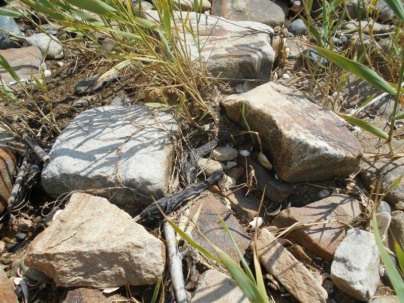 Камни ... DSCN2603.JPG
