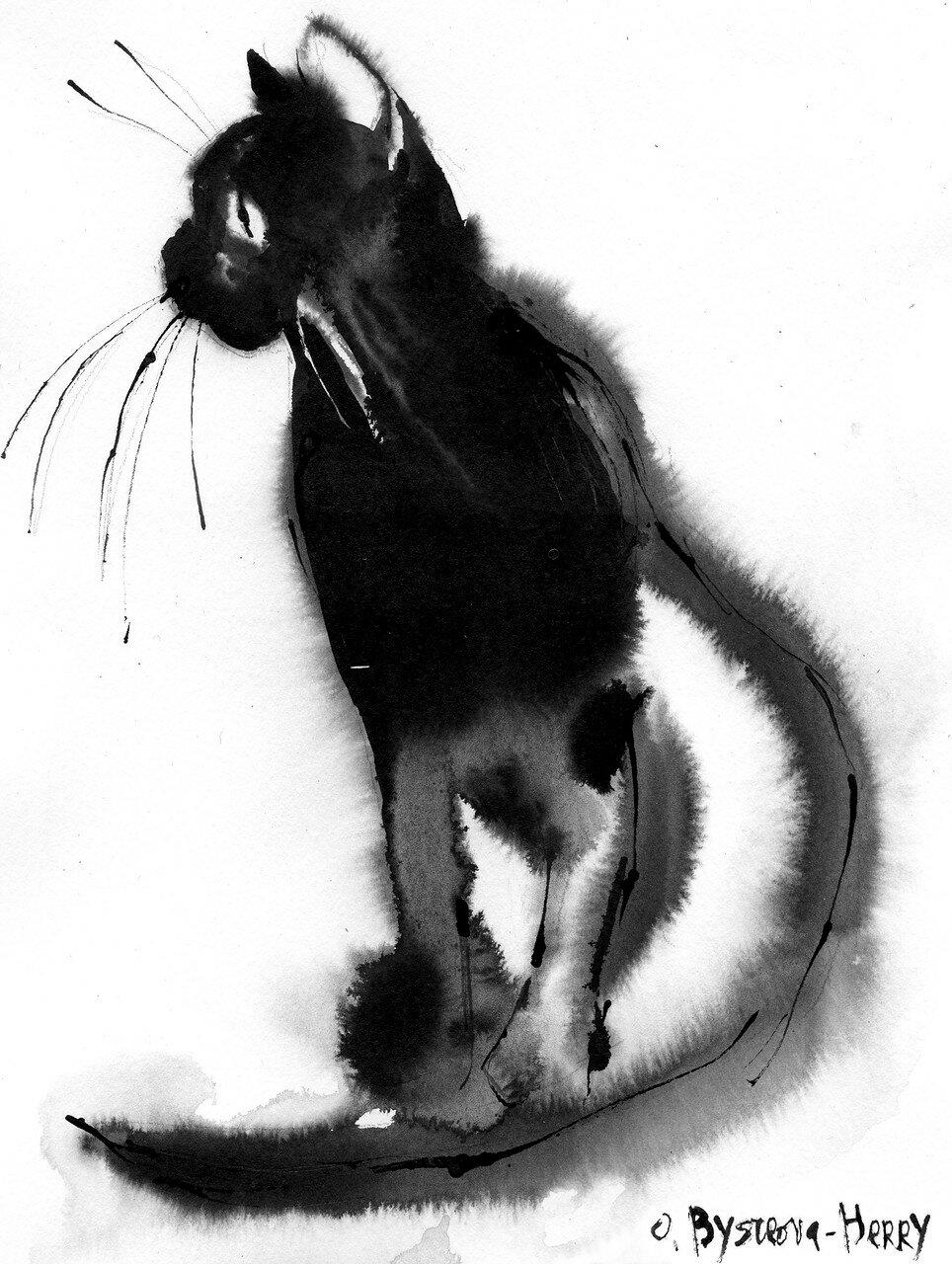 14 0519 Cat1