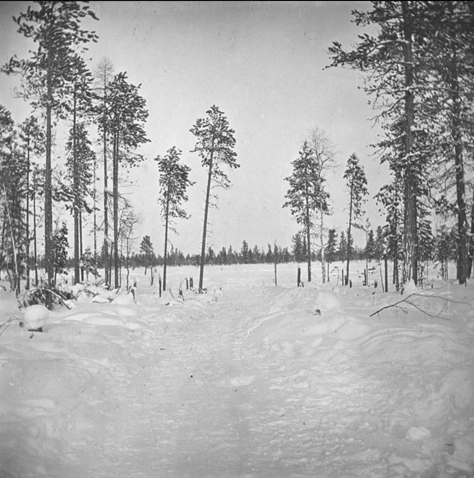 73. Заснеженный лес