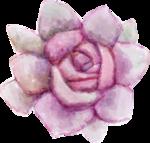 кактус (3).png