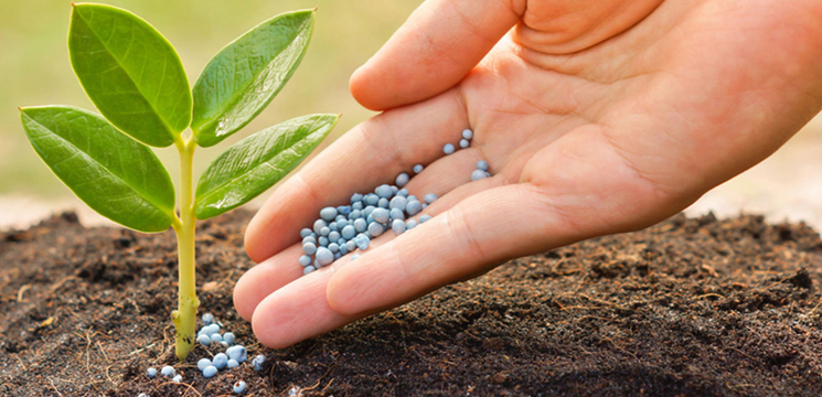 удобрения, семена, саженцы в Одессе