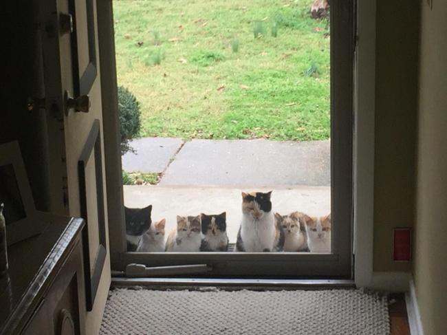 17человек, укоторых нет кошки, ноона вдруг появилась вихдоме (11 фото)